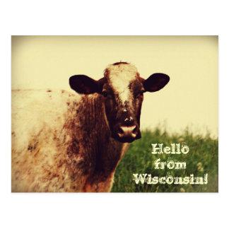 Cartão da foto da vaca de Wisconsin
