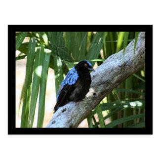 Cartão da foto do Bluebird feericamente Cartão Postal