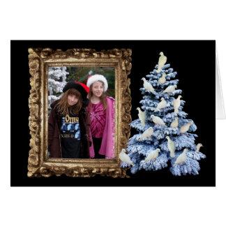 Cartão da foto do feriado da árvore da pomba