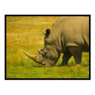 Cartão da foto do rinoceronte