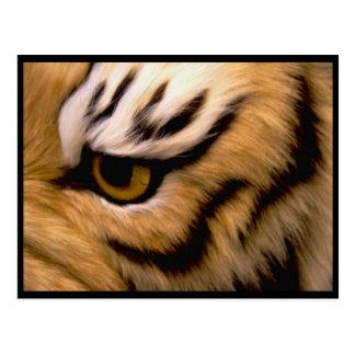 Cartão da foto do tigre