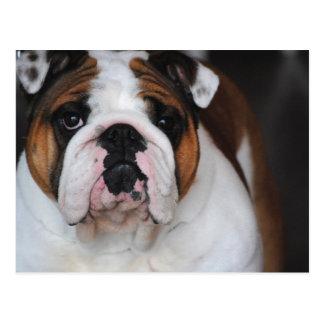 Cartão da fotografia do cão de Bull do inglês