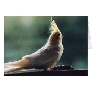 """Cartão da fotografia do pássaro do """"Cockatiel"""""""