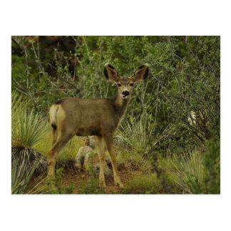Cartão da framboesa dos cervos de mula
