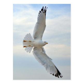 Cartão da gaivota