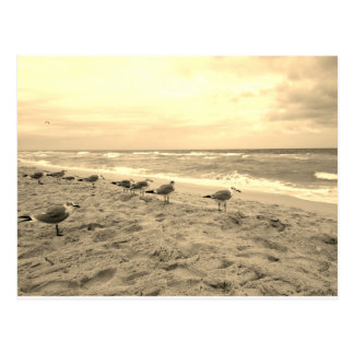 Cartão da gaivota do Sepia