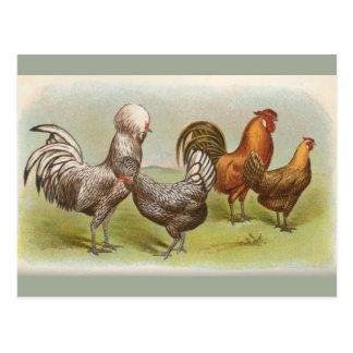 """""""Cartão da galinha polonesa atada prata"""" do Cartão Postal"""