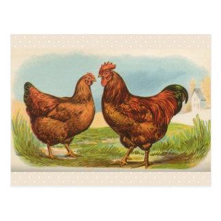 Cartão da galinha vermelha da ilha do vintage
