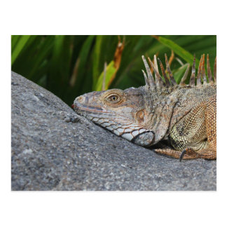 Cartão da iguana