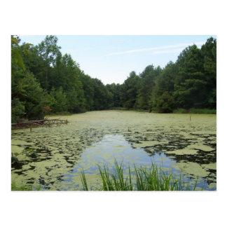 Cartão da lagoa