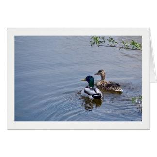 Cartão da lagoa do pato