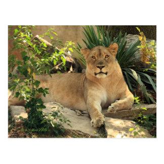 Cartão da leoa
