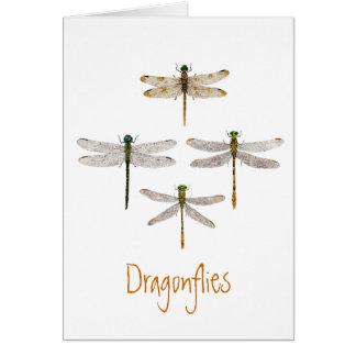Cartão da libélula