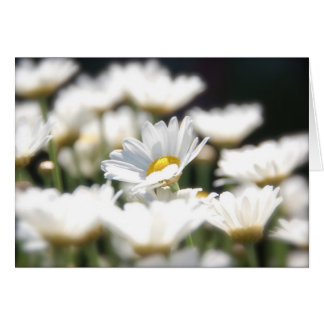 Cartão da margarida de Marguerite