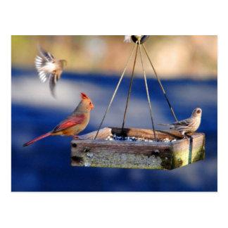 Cartão da mesa de pequeno almoço (pássaros)