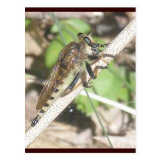 Cartão da mosca de ladrão