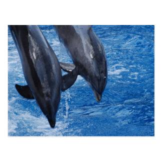 Cartão da mostra do golfinho