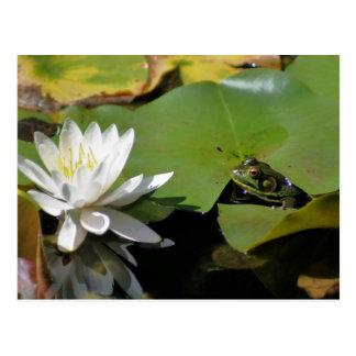 Cartão da natureza da flor do lírio do sapo e de