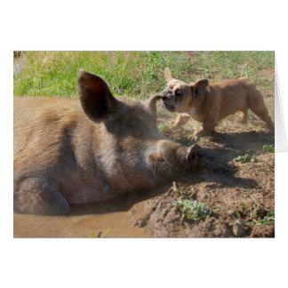 Cartão da orelha dos porcos