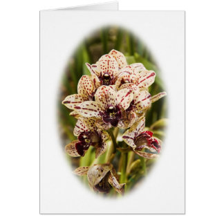 Cartão da orquídea de Jaguar