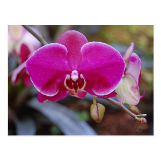 Cartão da orquídea de traça