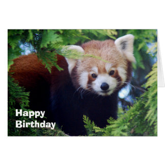 Cartão da panda vermelha