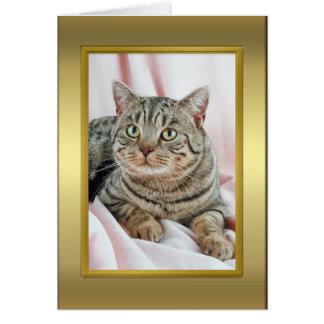 Cartão da pedigree do gato