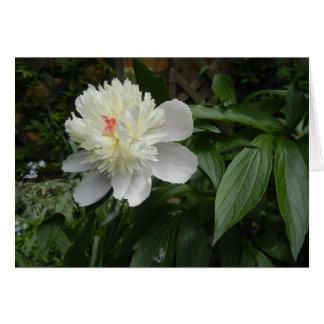 Cartão da peônia (Paeonia)