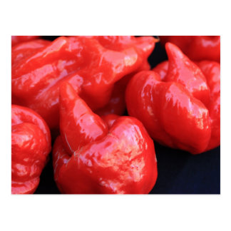 Cartão da pimenta de pimentão do escorpião de