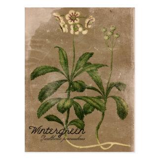 Cartão da planta de Wintergreen do estilo do