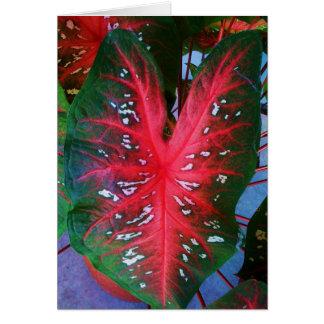 Cartão da planta do coração