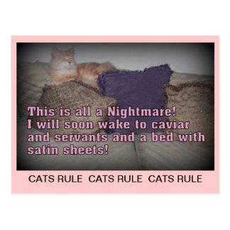 Cartão da regra dos gatos