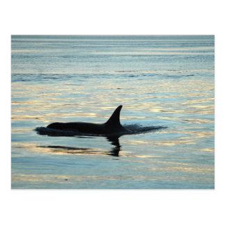 Cartão da silhueta da orca