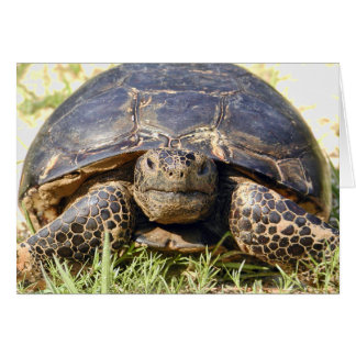 Cartão da tartaruga