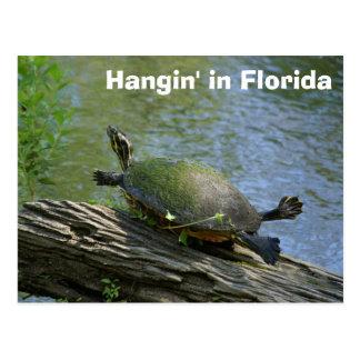 Cartão da tartaruga de Florida