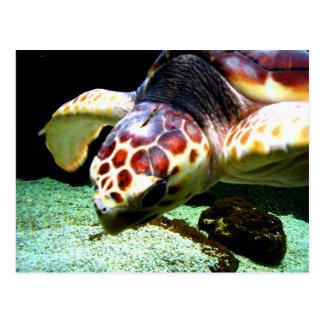 Cartão da tartaruga de mar