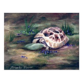 Cartão da tartaruga do anjo