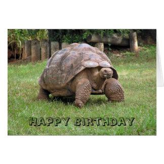 Cartão da tartaruga gigante