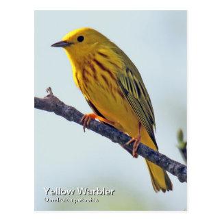 Cartão da toutinegra amarela