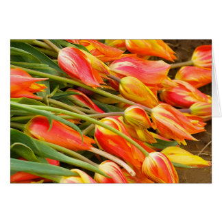 Cartão da tulipa