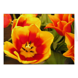Cartão da tulipa da glória do primavera