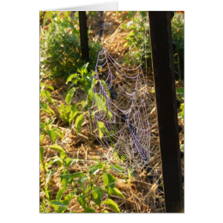 Cartão da Web de aranha e das gotas de orvalho