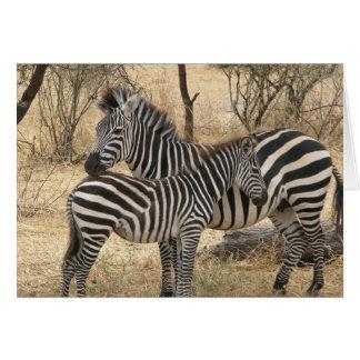 Cartão da zebra da mãe e do bebê