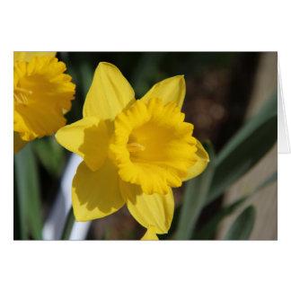 Cartão Daffodil ensolarado