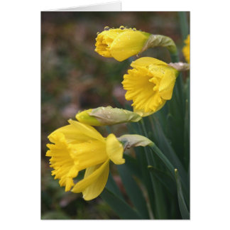 Cartão Daffodil Notecard 2