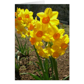 Cartão Daffodils amarelos
