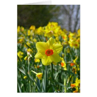 Cartão Daffodils amarelos alaranjado 01.0.3.0