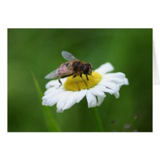 Cartão daisybee 2