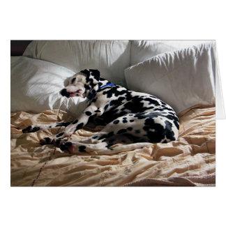 Cartão Dalmatian de sono