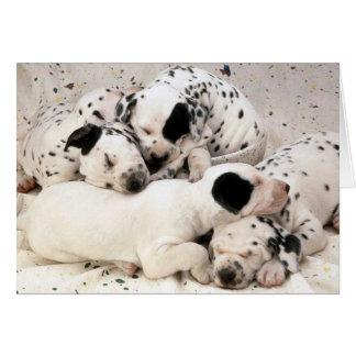 Cartão Dalmation_Puppies